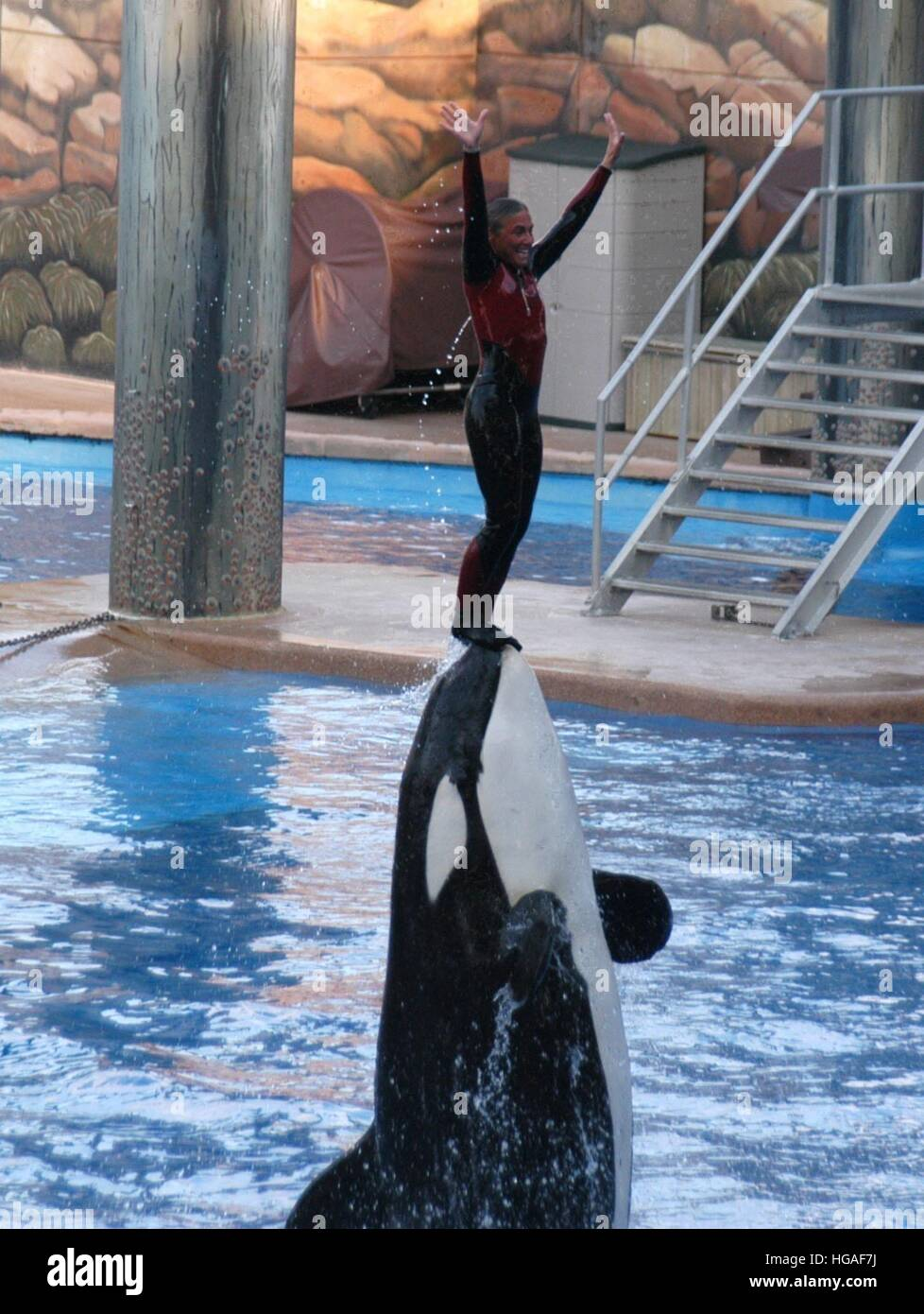 File  7th Jan, 2017  Tilikum, the orca that killed a trainer at