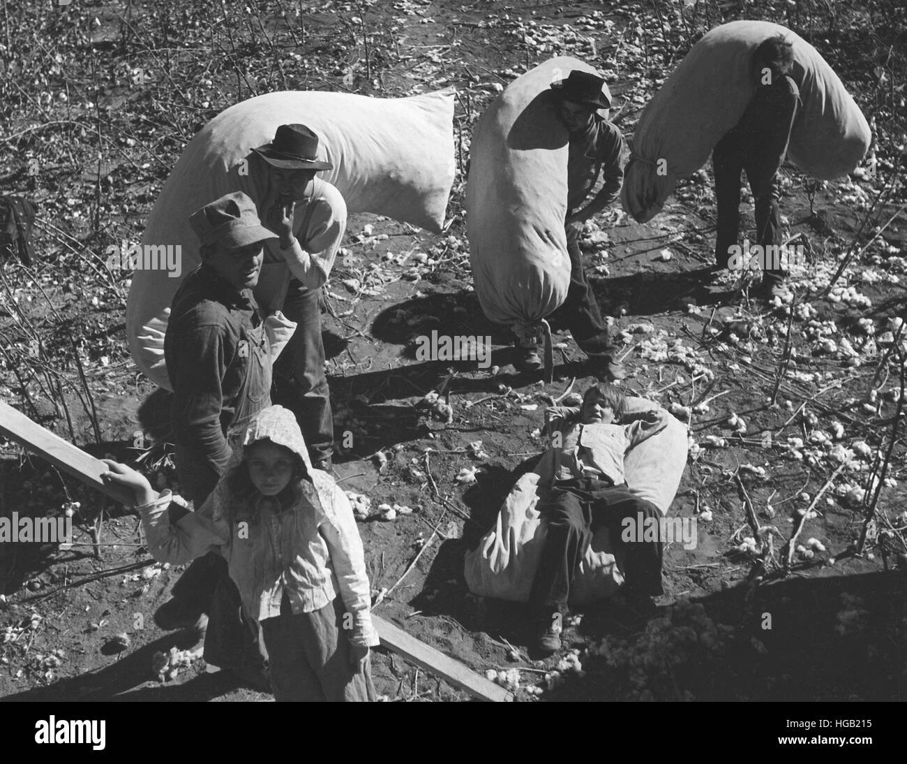 Family labor at cotton picking time on a farm near Coolidge, Arizona, 1940. - Stock Image