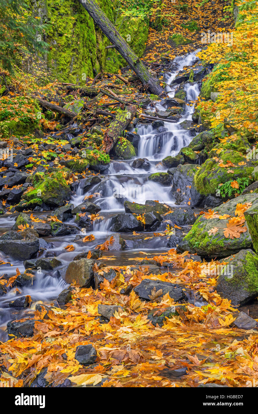USA, Oregon, Columbia River Gorge National Scenic Area, Starvation Creek in autumn with fallen maple leaves, rocks - Stock Image