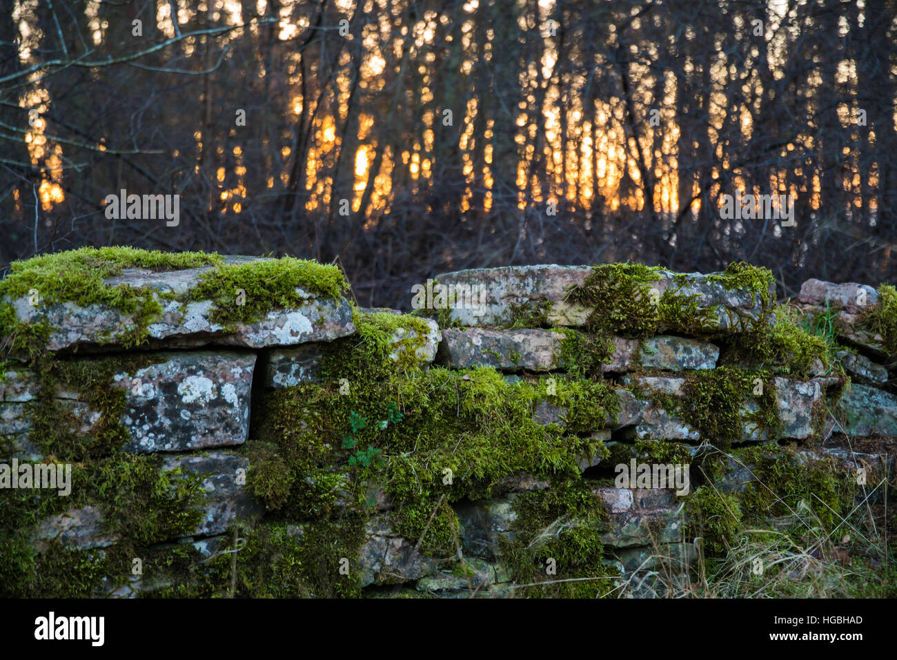 Old mossy stone wall detail - Stock Image