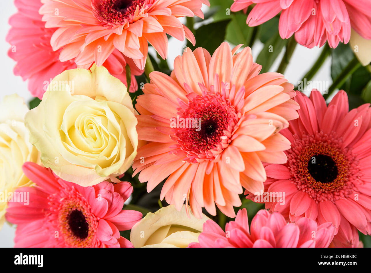 Pink gerbera daisy flowers and white roses bouquet stock photo pink gerbera daisy flowers and white roses bouquet izmirmasajfo