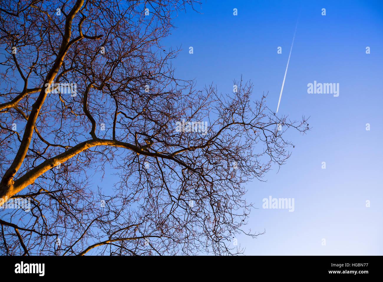 Tree branch on blue sky background. Stock Photo