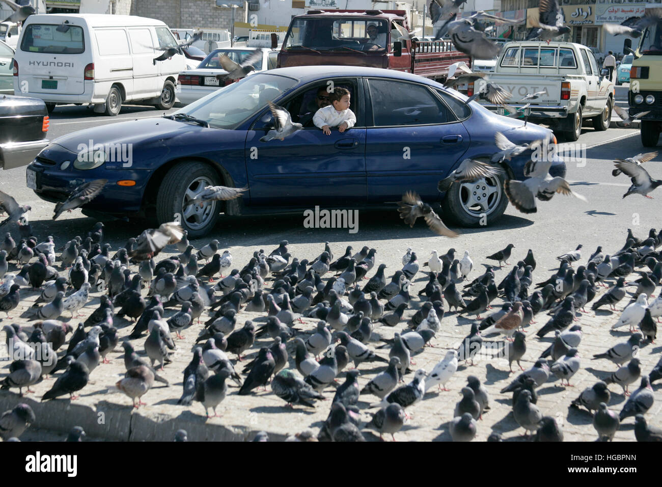 Qatar, Doha, little boy looking out of a car window to a large number of pigeons on the ground Stock Photo