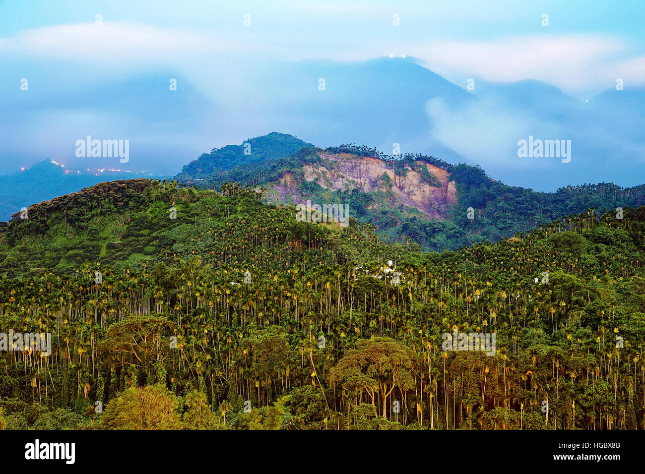 Betel nut trees on a mountain at night time - Stock Image