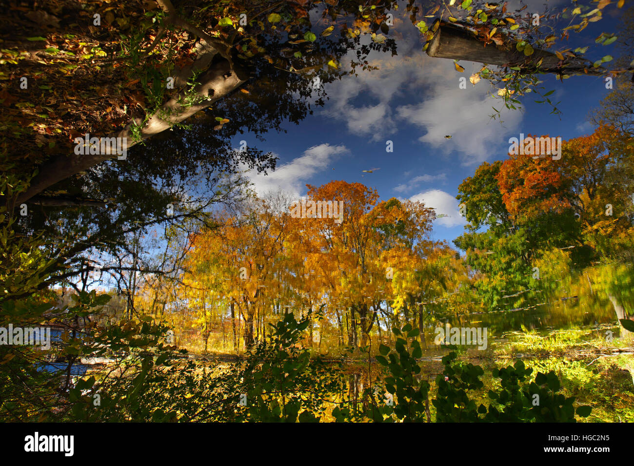 Inverted colorful art abstract reflection of autumn trees in a pond - Stock Image
