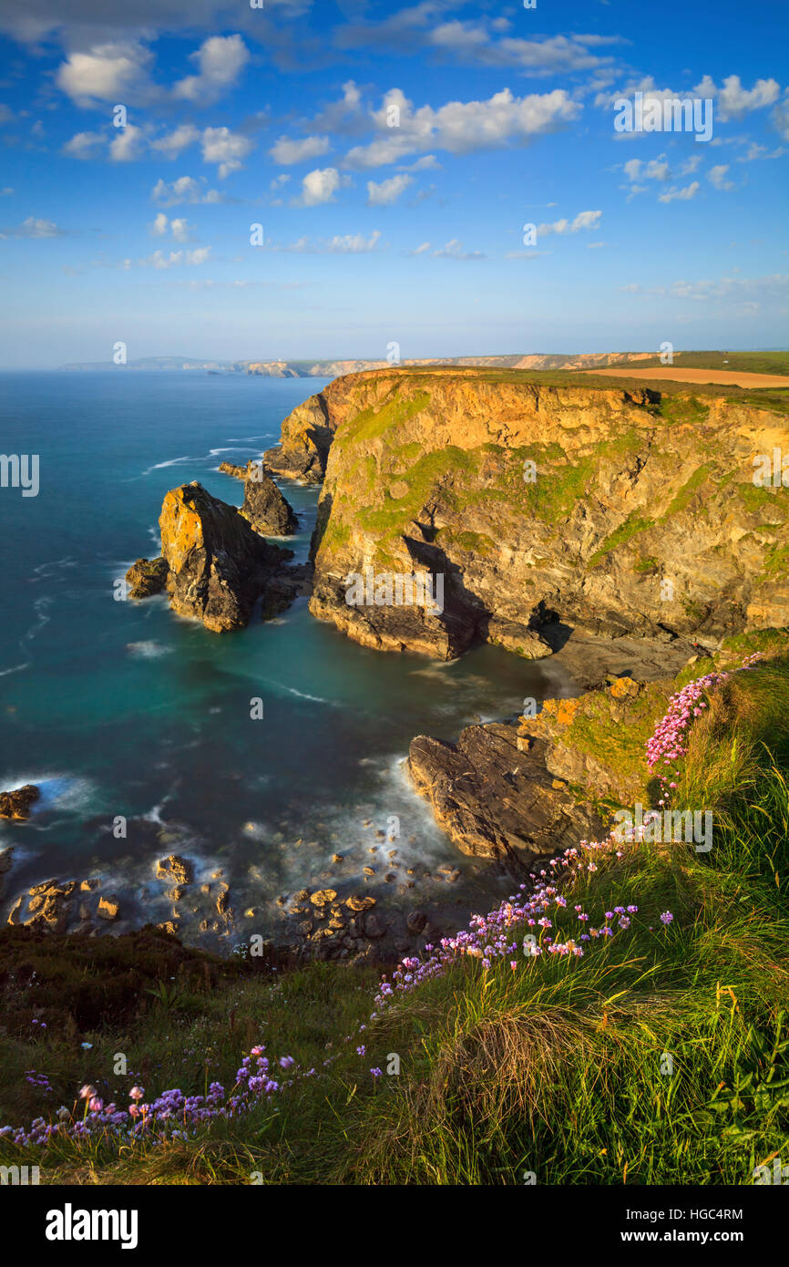 Thrift at Hell's Mouth on the North Coast of Cornwall. - Stock Image