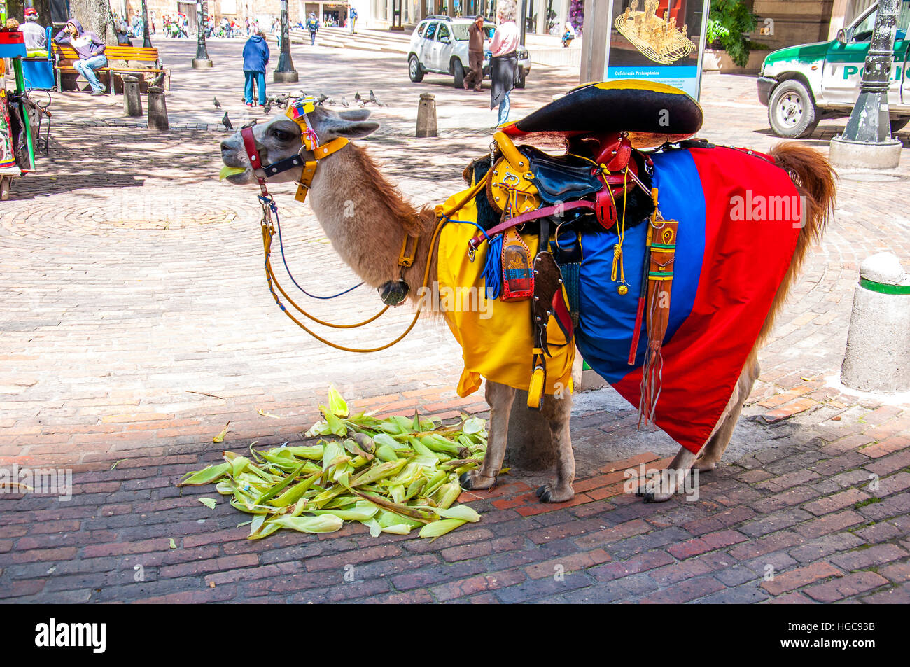 Lama with Colombian flag - Stock Image