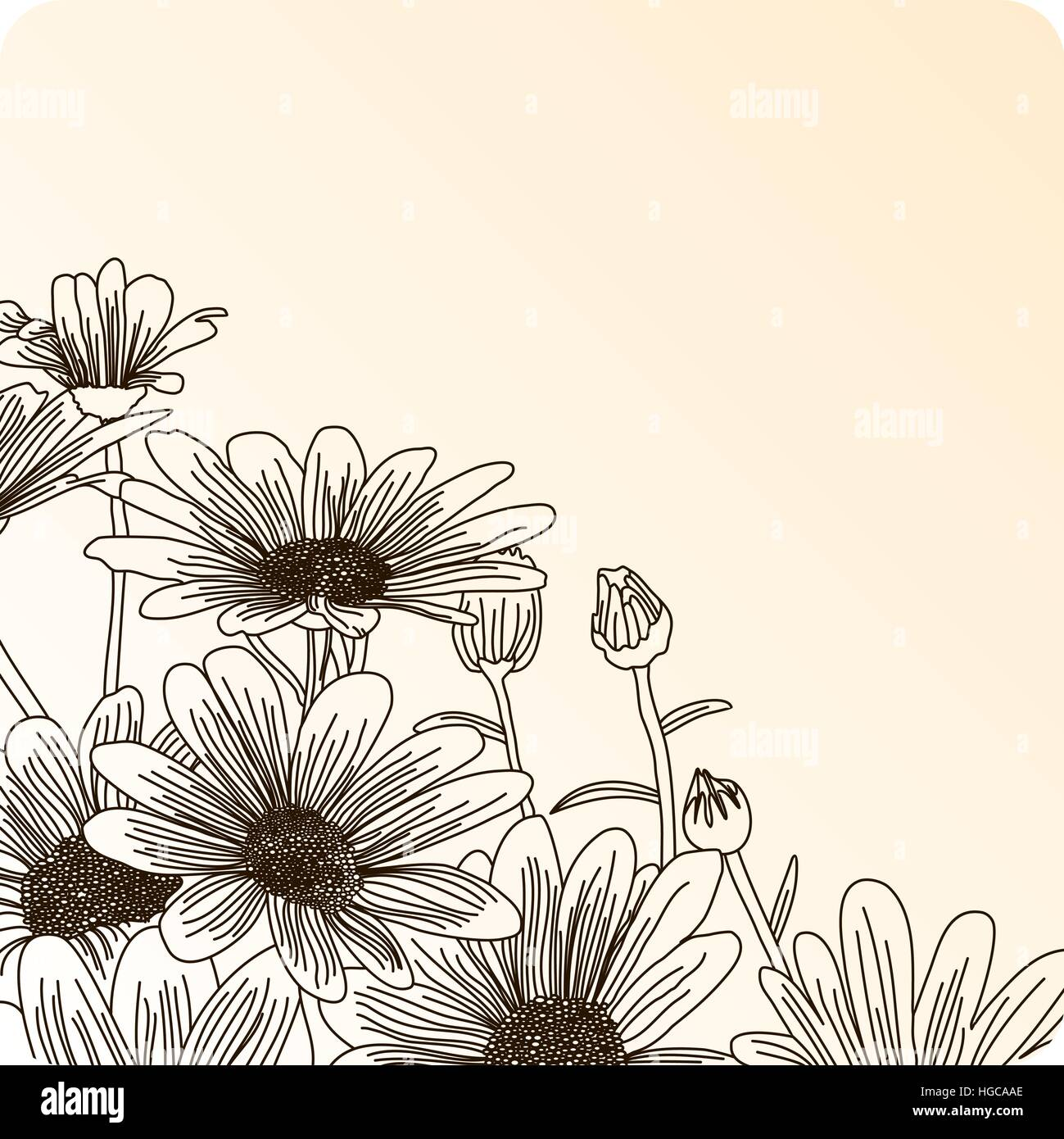 Daisy Flowers On A Beige Background Outline Drawing Vector Flowers