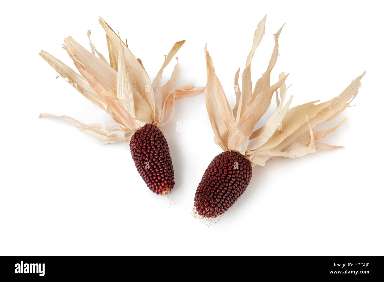 Strawberry Corn ears on white background - Stock Image