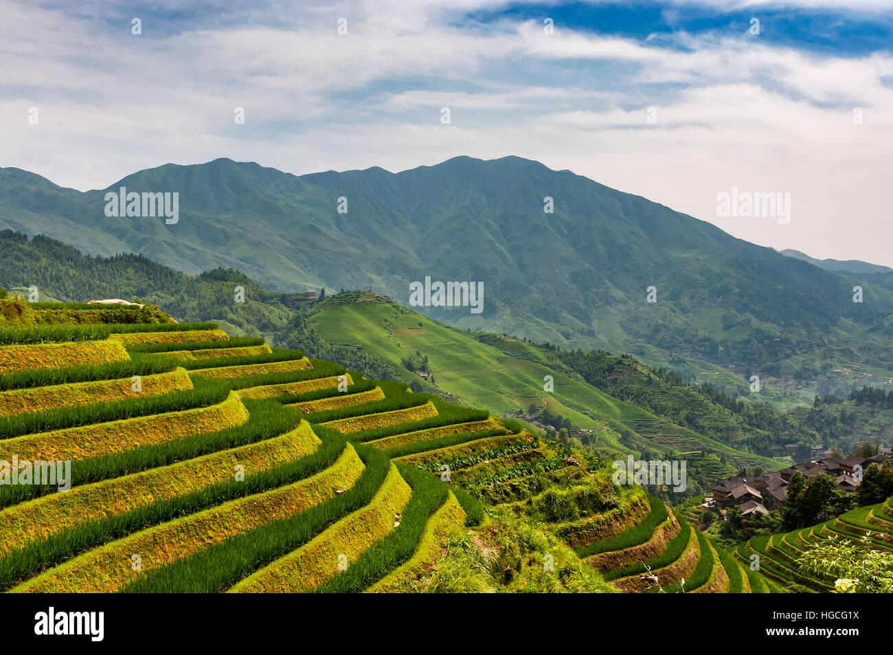 View of the Longsheng Rice Terraces (Dragon's Backbone Rice Terraces) in Guangxi, China. - Stock Image