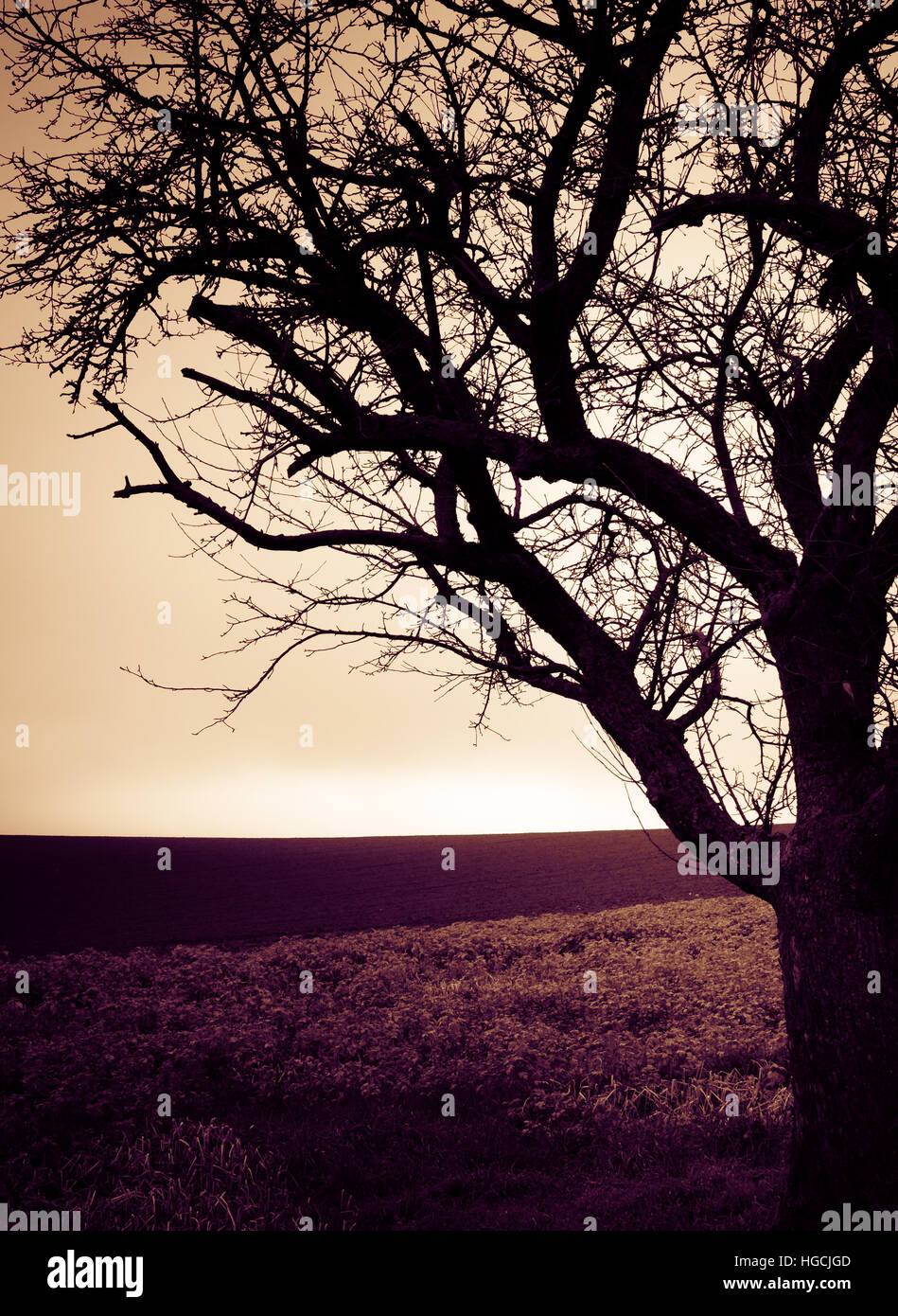 Landscape with a lonely tree - Stock Image