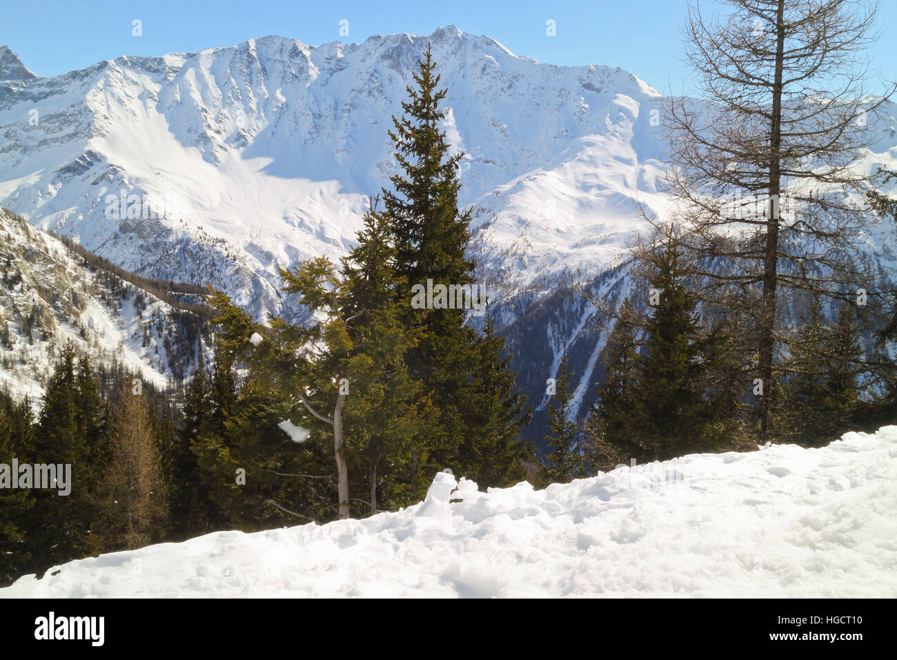 High up in snowy Alps, off piste by pine trees , winter landscape, Les Arcs, Paradiski, France - Stock Image