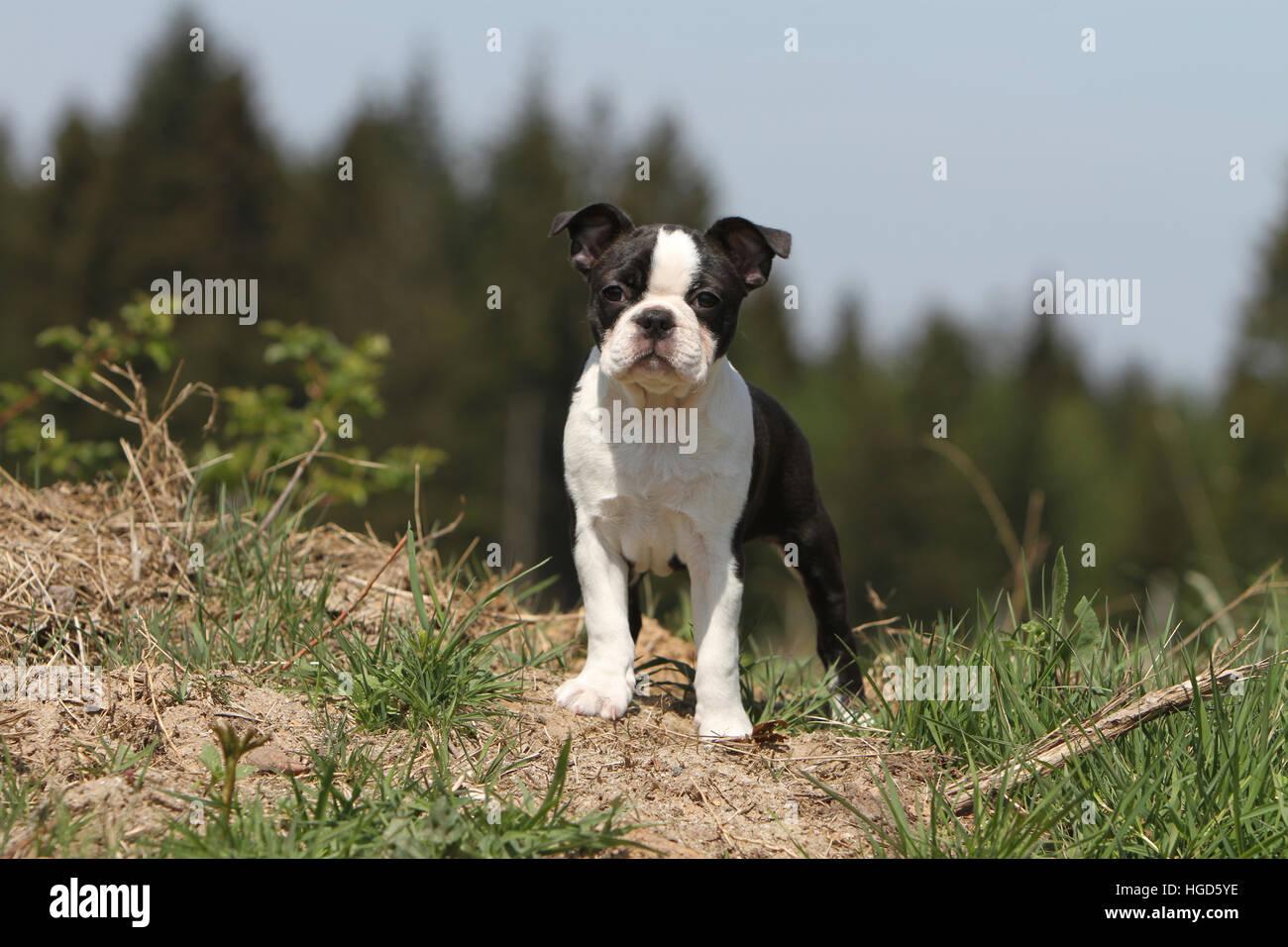 Dog With Blue Ye Breed
