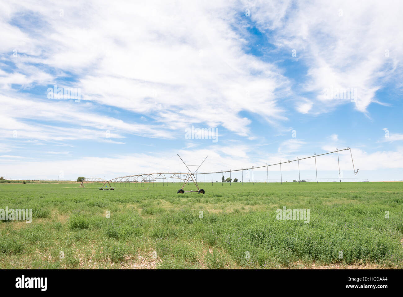 A center pivot irrigation system in a lucerne field using rotator style pivot applicator sprinklers near Jacobsdal - Stock Image