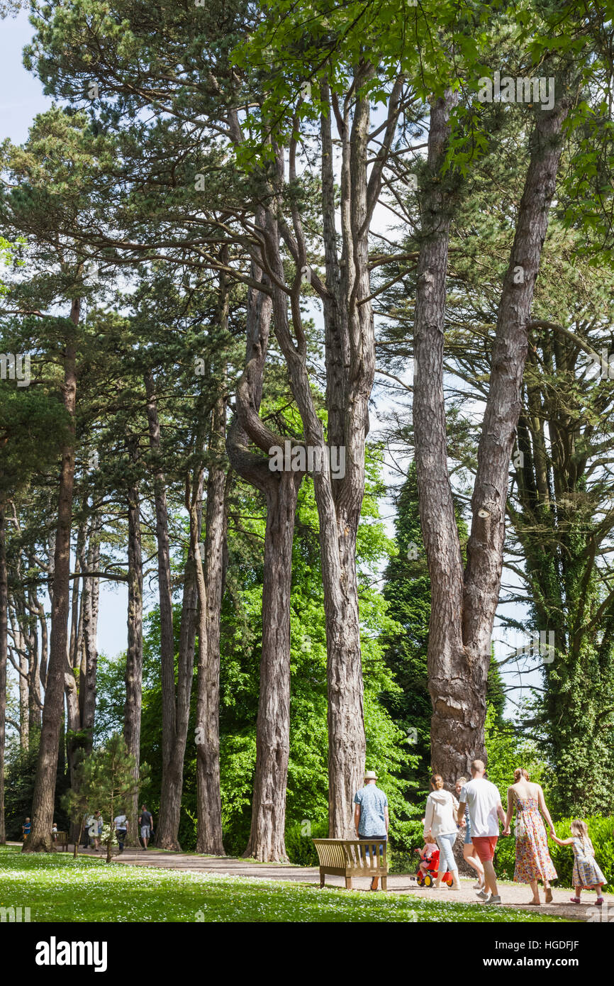Wales, Cardiff, St Fagan's, Museum of Welsh Life, Tourists Walking Through Woods - Stock Image