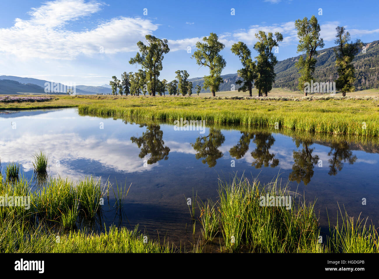 WY02025-00...WYOMING - Sunrise over the Lamar Valley with trees reflecting in the Lamar River,  Yellowstone National - Stock Image