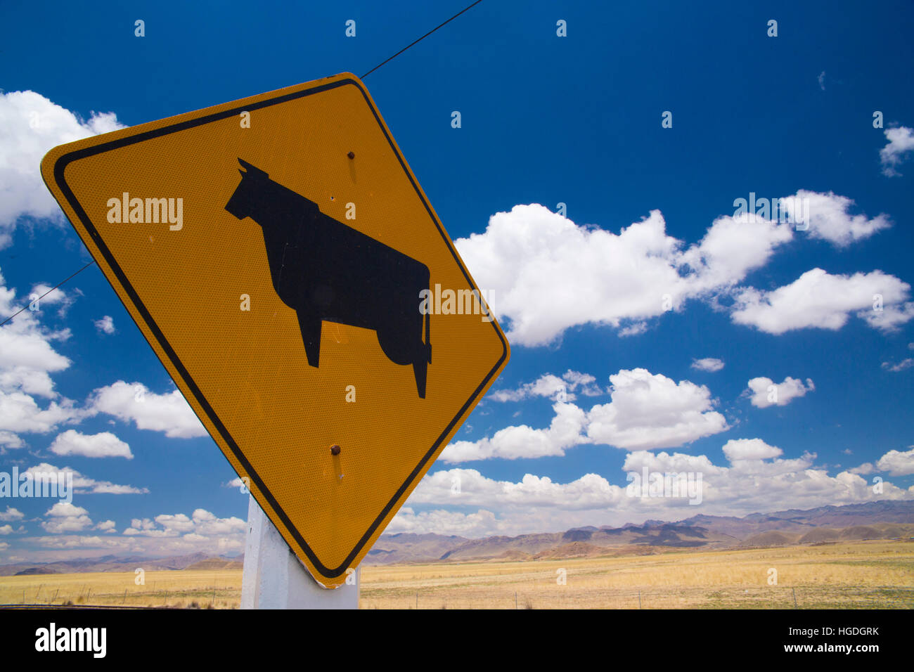 Cattle breeding sign in the Altiplano, - Stock Image