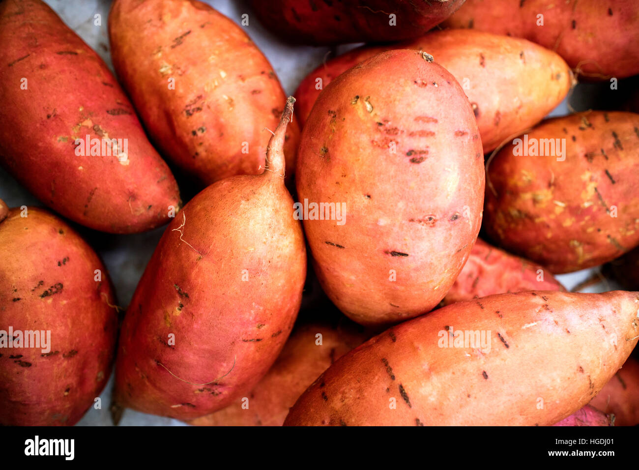 Sweet potato a dicotyledonous plant belonging to the morning glory family Convolvulaceae in farmers market - Stock Image
