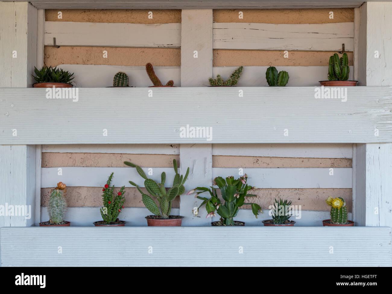 Garden idea with a pallet - Stock Image