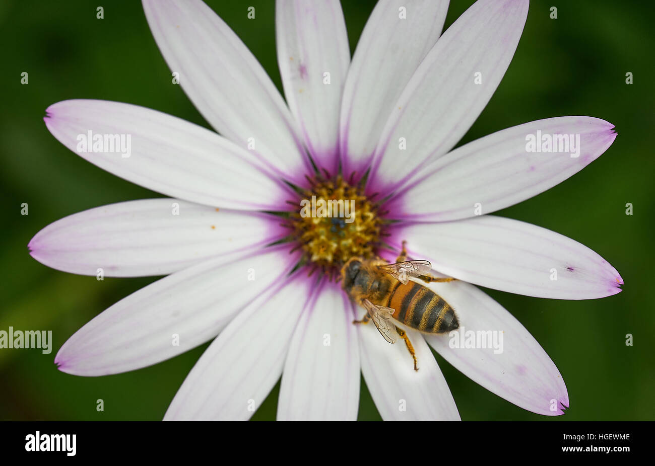 Daisy Like Flower Stock Photos Daisy Like Flower Stock Images Alamy