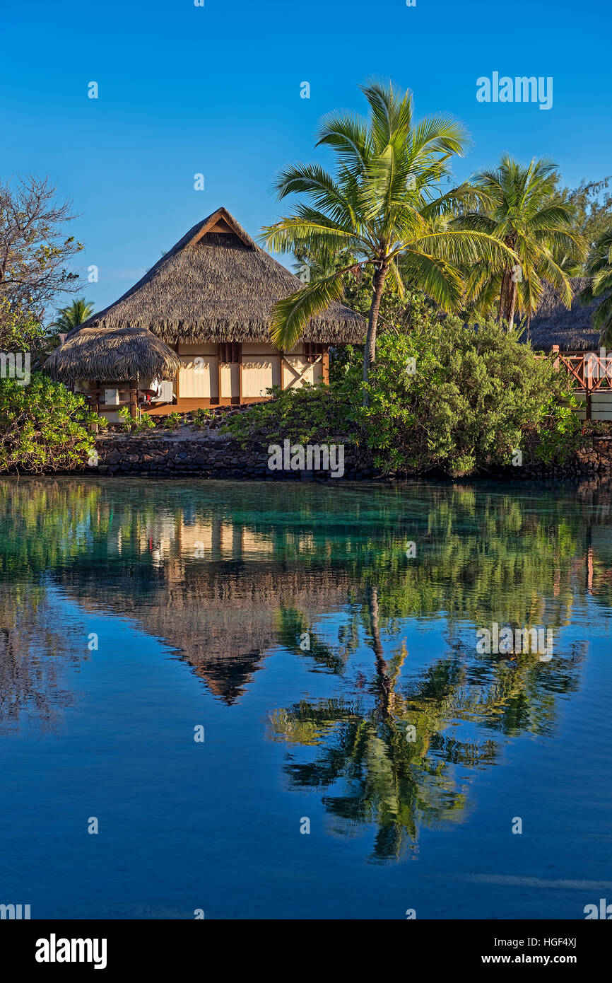 Bungalow with palm trees by the water, reflection, Mo'orea, French Polynesia - Stock Image
