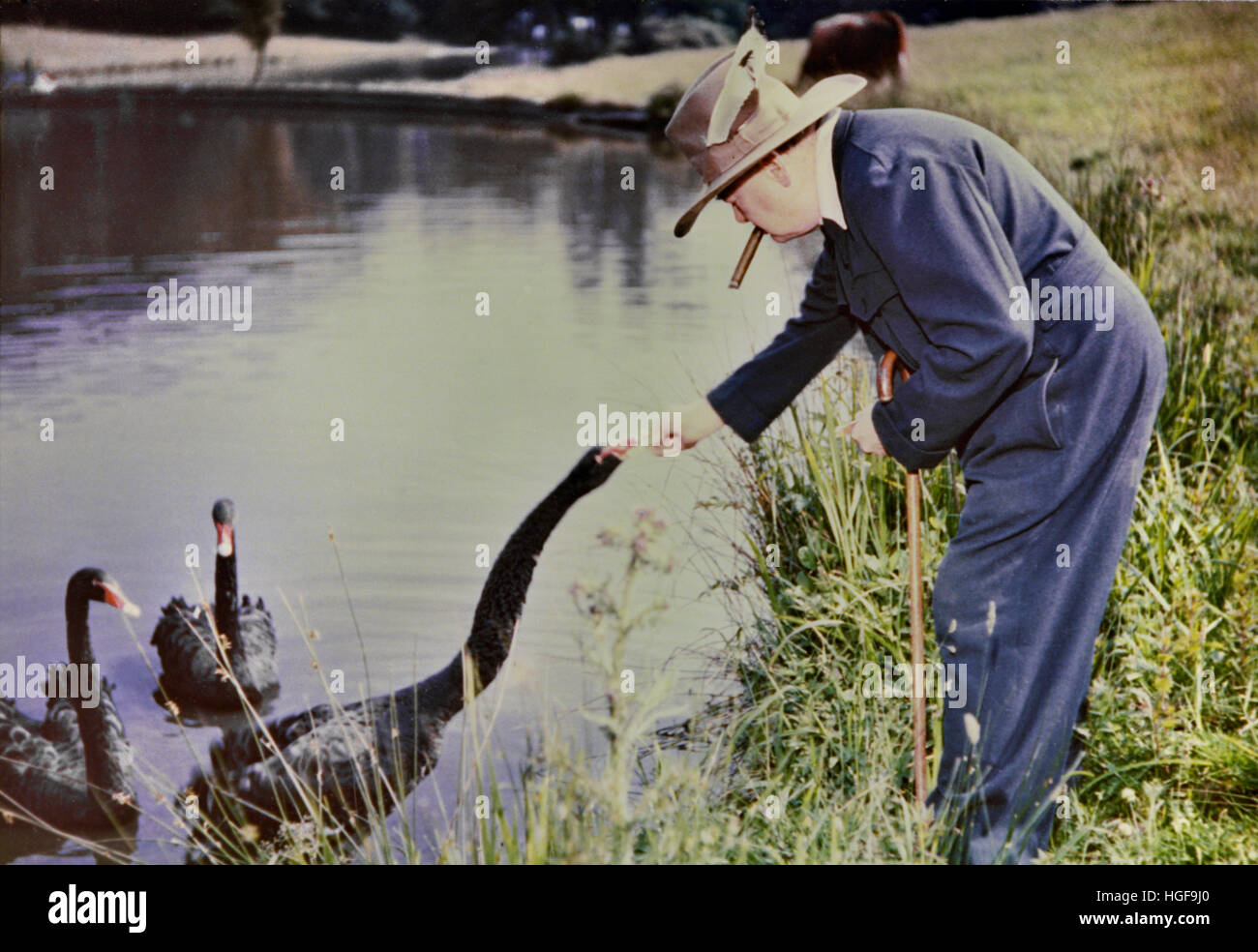 Winston Churchill feeding the black swans at Chartwell, a gift from the people of Western Australia - Stock Image