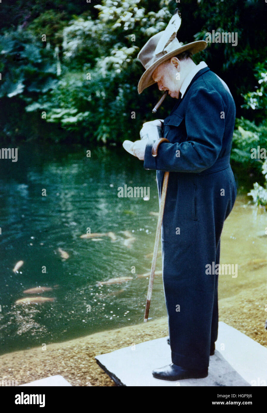 Color photograph of Winston Churchill feeding the goldfish at Chartwell - Stock Image