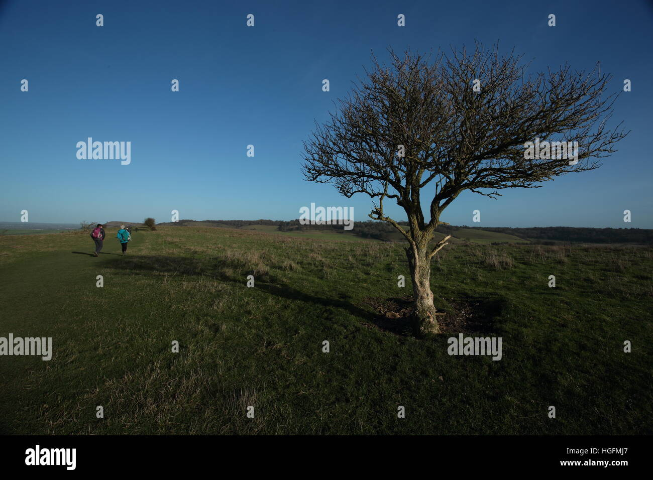 walking on the Ridgeway,near Ivinghoe Beacon ,Herts - Stock Image