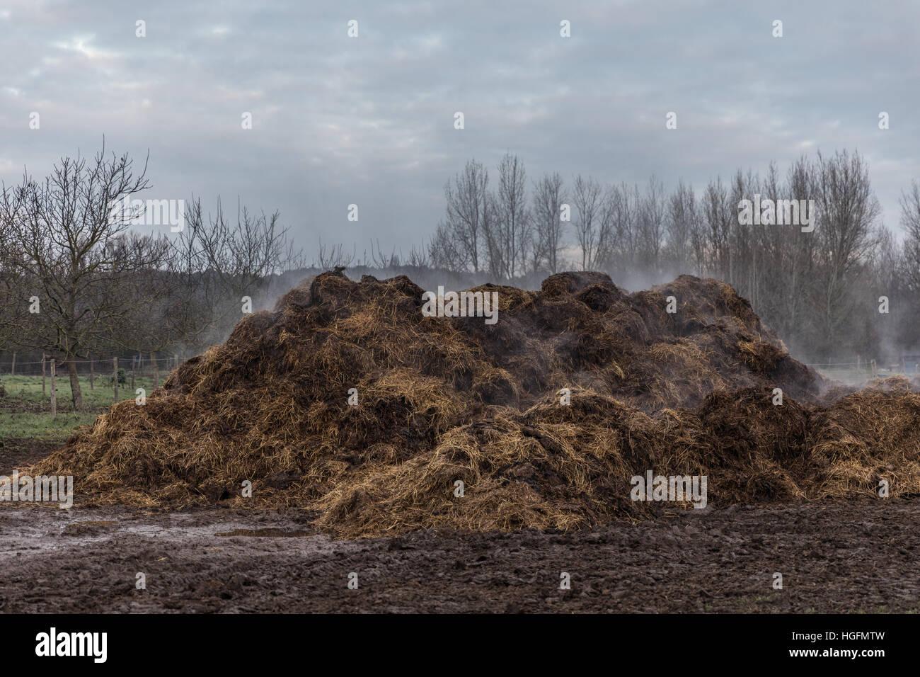 Horse Manure Pile Stock Photo