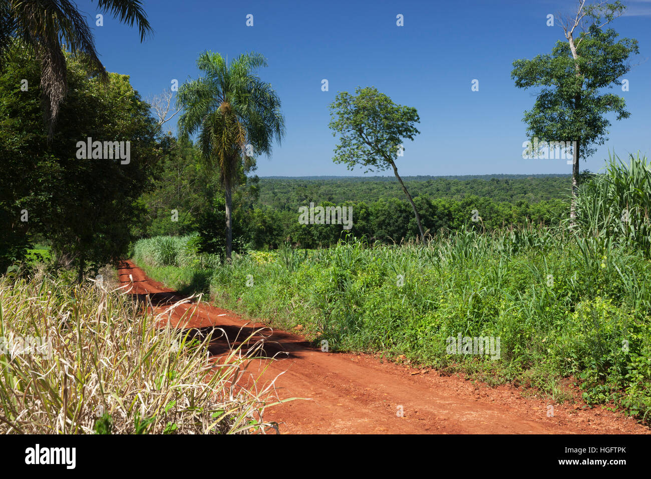 Dirt road running through sub-tropical rainforest, Andresito, Iguazu National Park, Misiones Province, The Northeast, - Stock Image