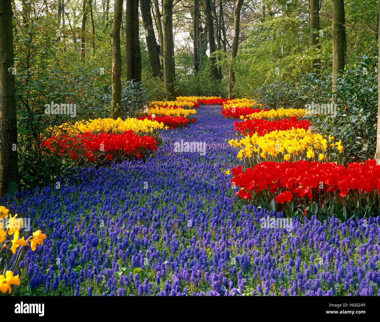 Keukenhof Gardens, Lisse, near Amsterdam, Holland - Stock Image