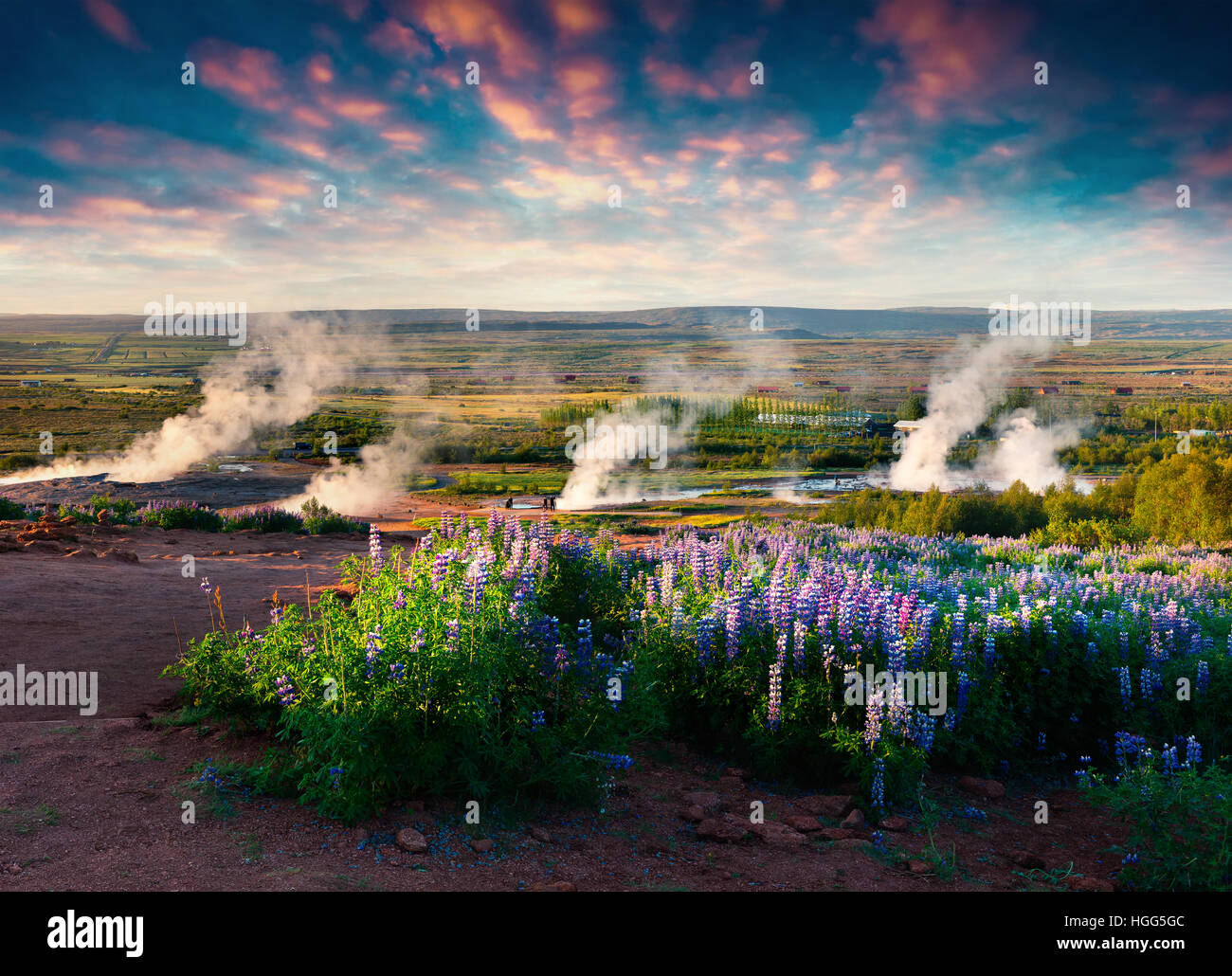 Erupting of the Great Geysir lies in Haukadalur valley on the slopes of Laugarfjall hill. Foggu summer morning in Stock Photo