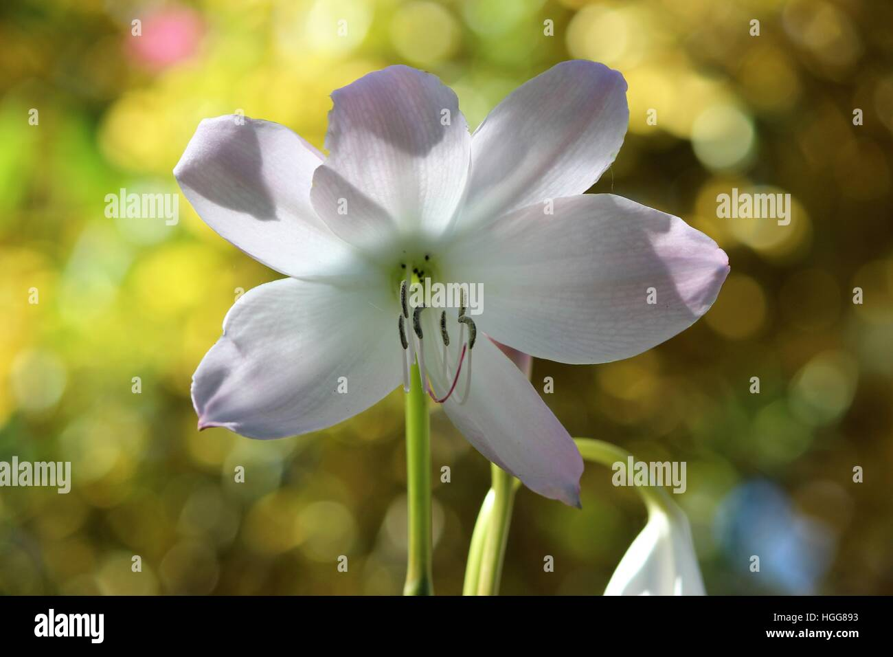 flower close up blurred background - Stock Image