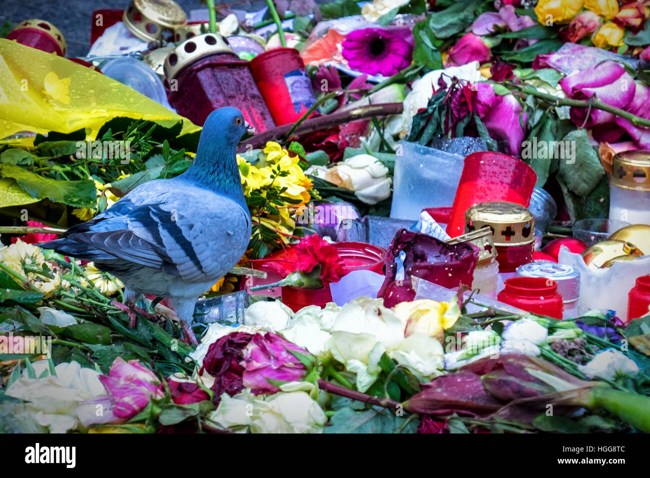 Pigeon looks at Memorial, candles, flowers for victims of terrorist attack at German Christmas Market, Breitscheidplatz, - Stock Image