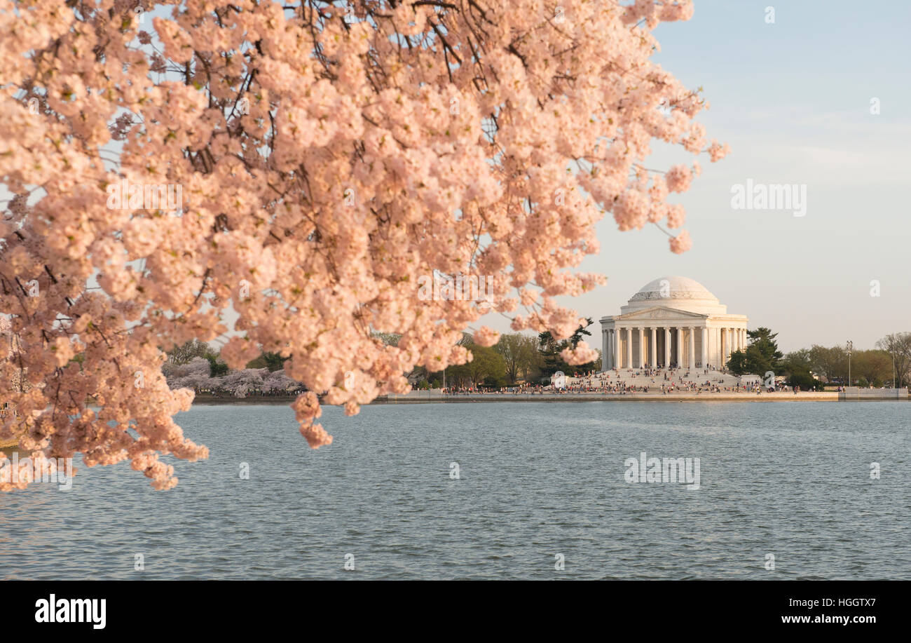 The Thomas Jefferson Memorial is framed by cherry blossoms at sunset. - Stock Image