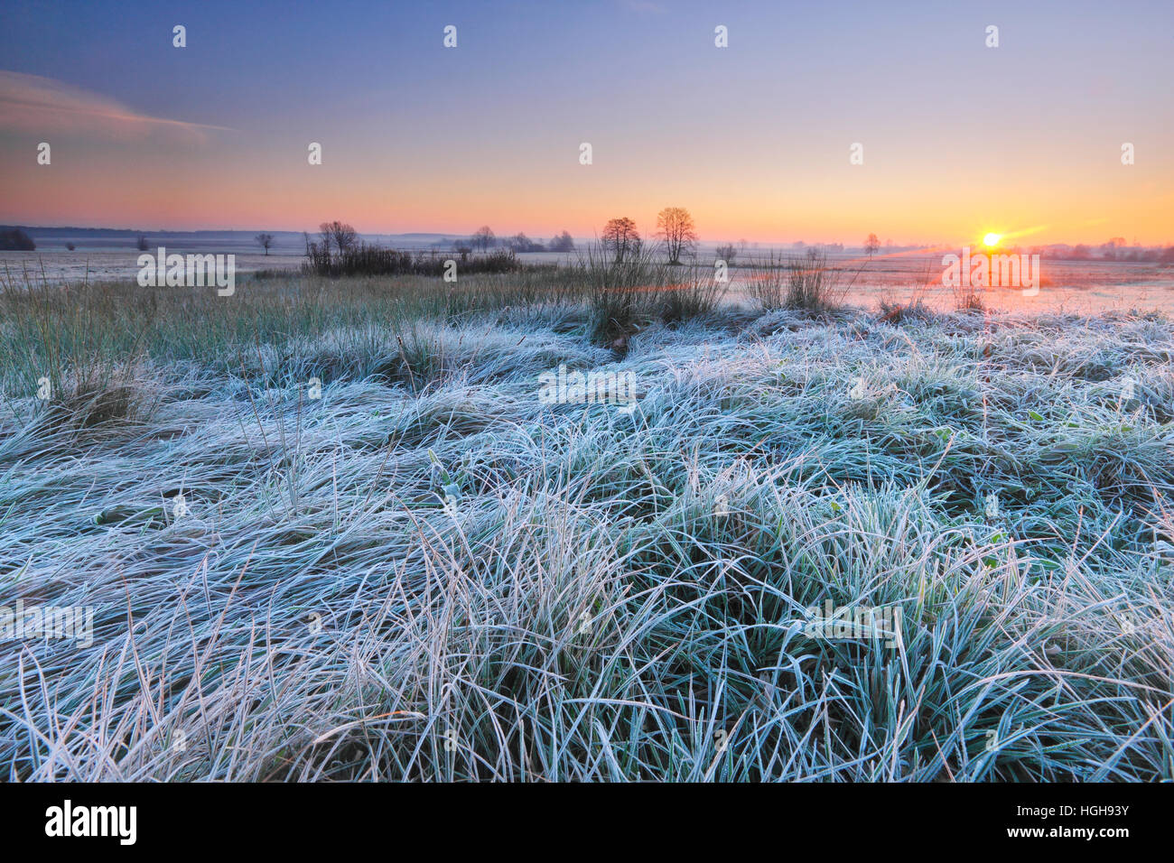 Sunrise on the frosty meadow - Stock Image