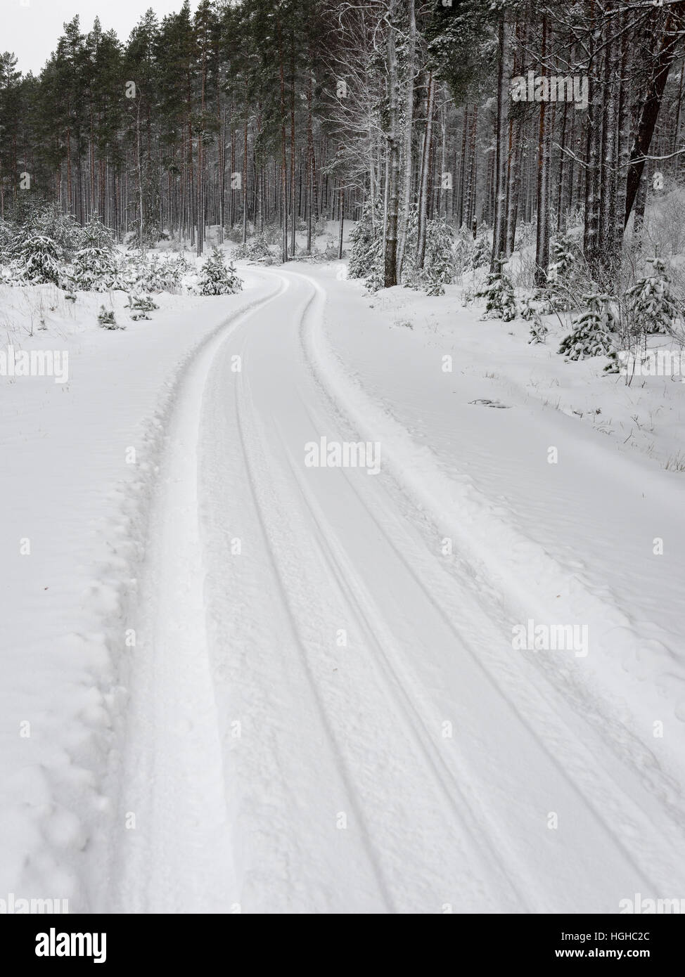 car tire tracks on winter road in deep snow in lonely forest - Stock Image