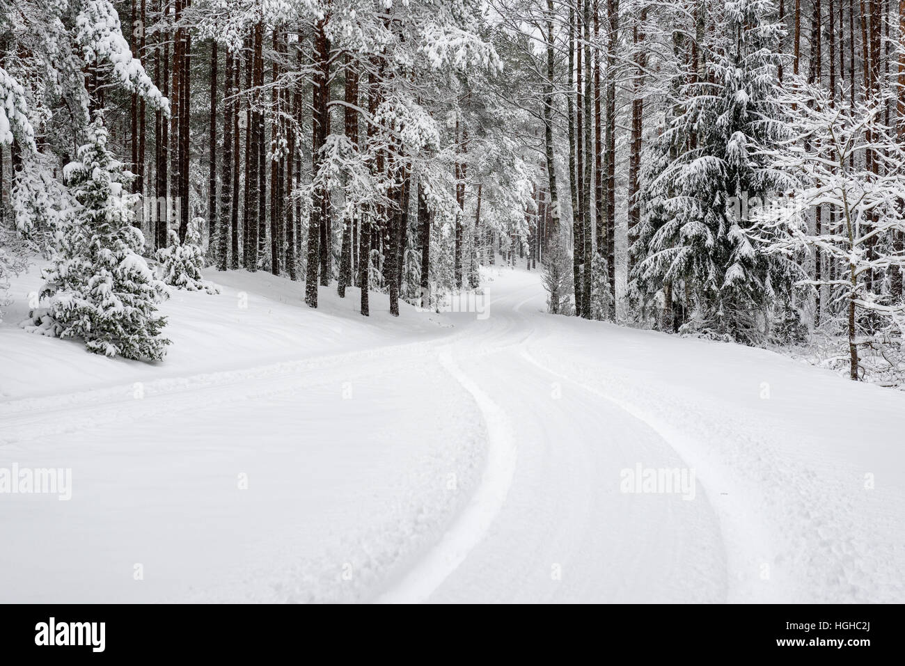 car tire tracks on winter road in deep snow in lonely forest Stock Photo