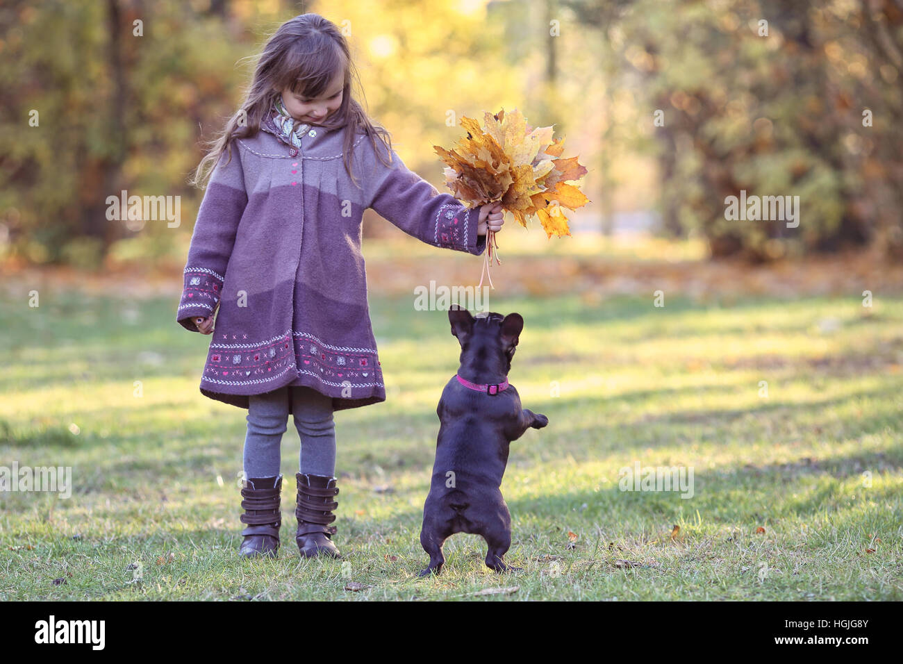 French bulldog with a little girl have fun - Stock Image