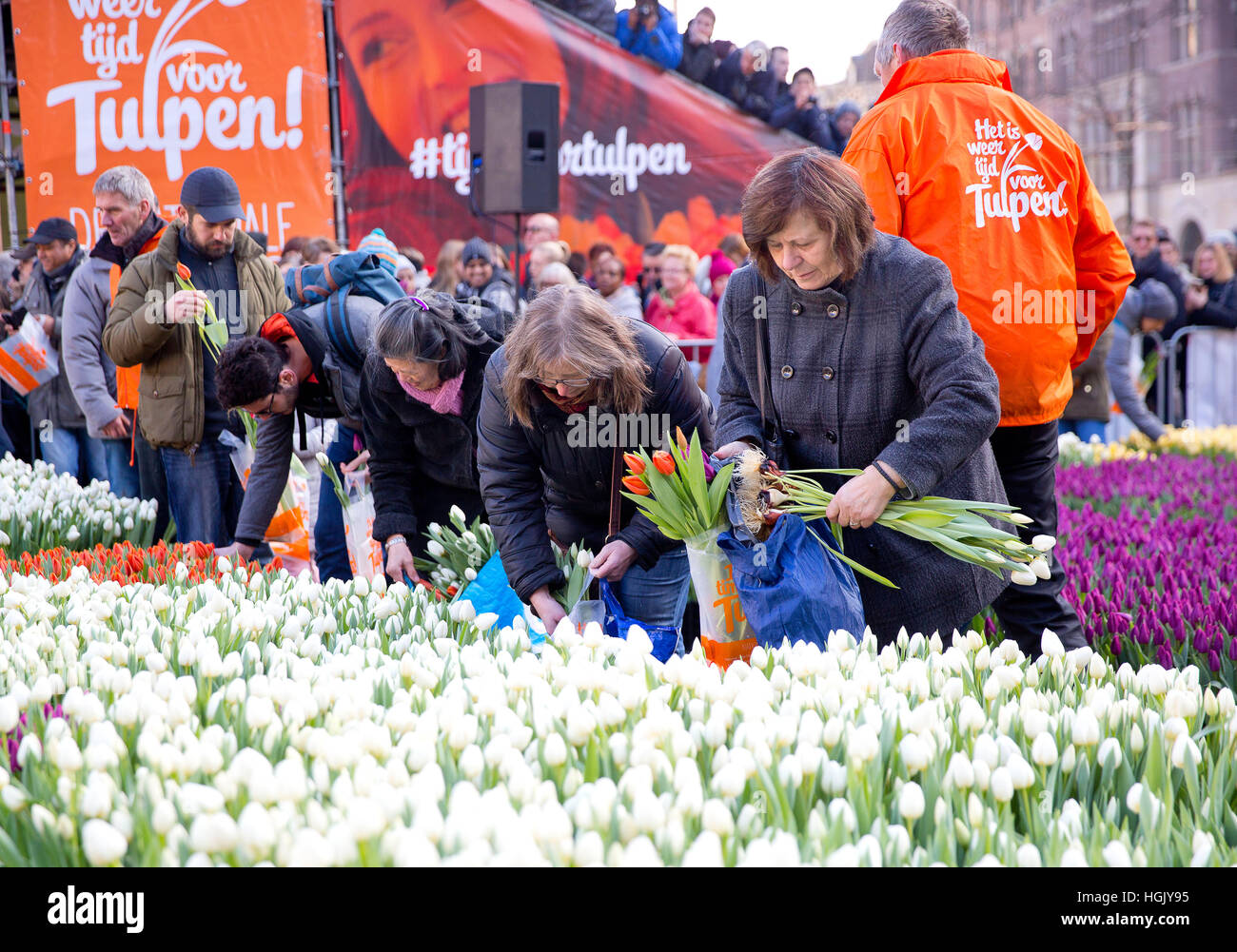 Amsterdam. 21st Jan, 2017. On the Dam tulips are picked during the National Tulip Day, on January 21, 2017, in Amsterdam. Stock Photo