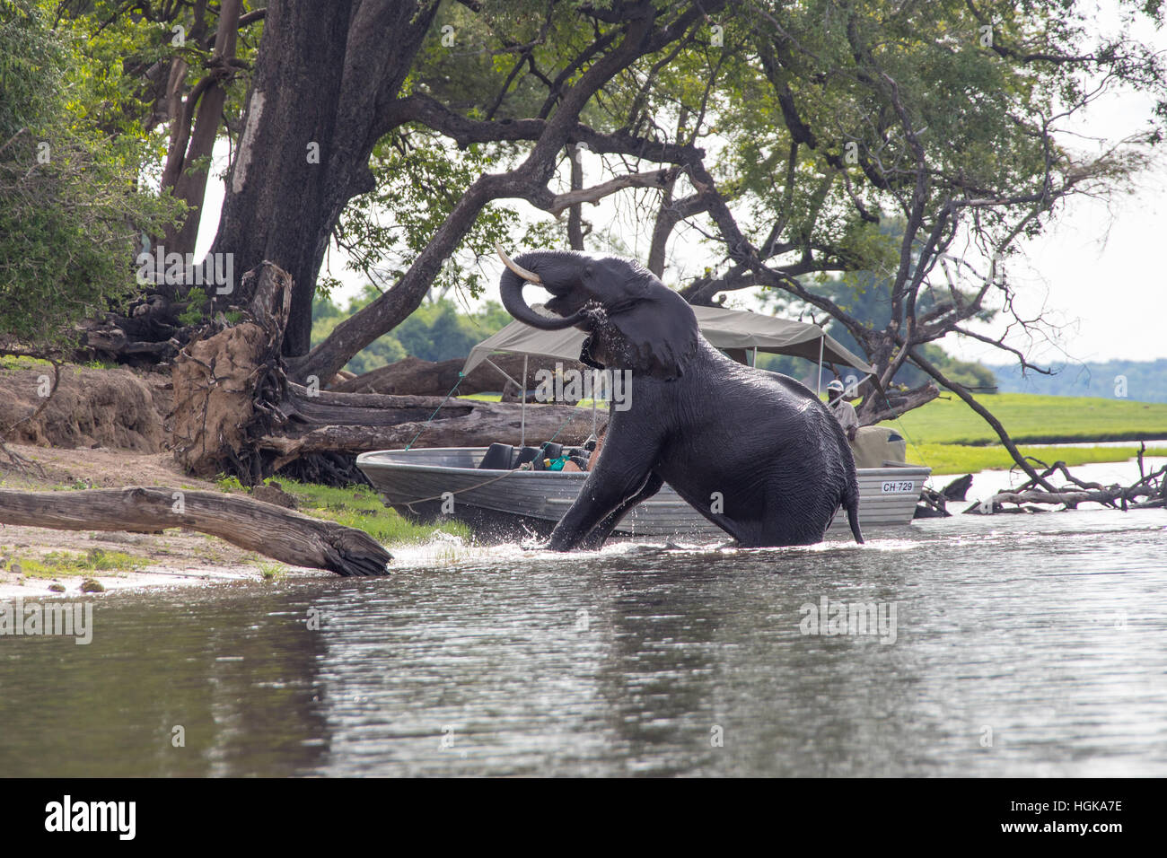 Tourists on a river safari in Chobe National Park, Botswana, Africa - Stock Image