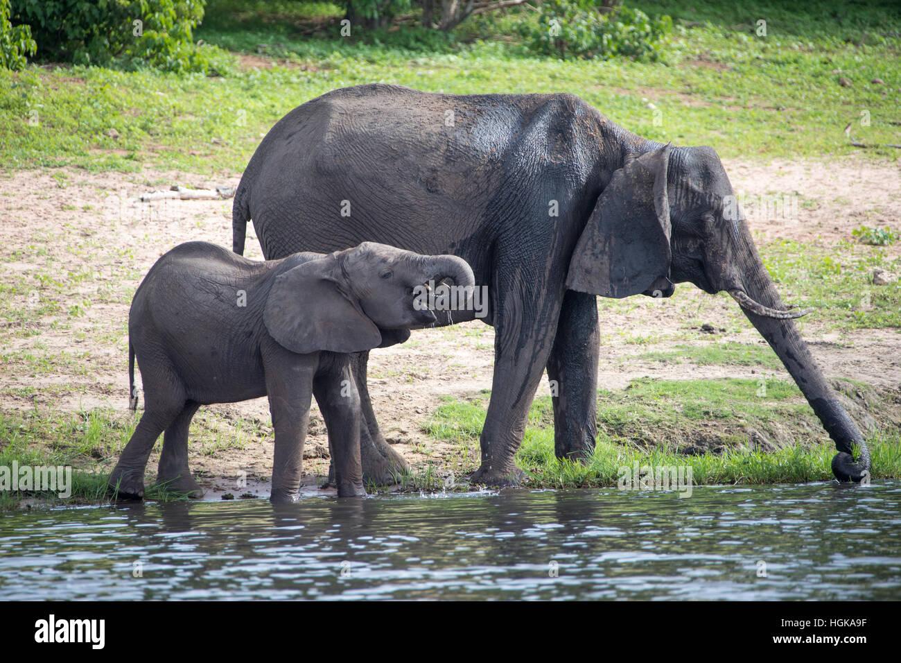 Chobe National Park, Botswana, Africa - Stock Image