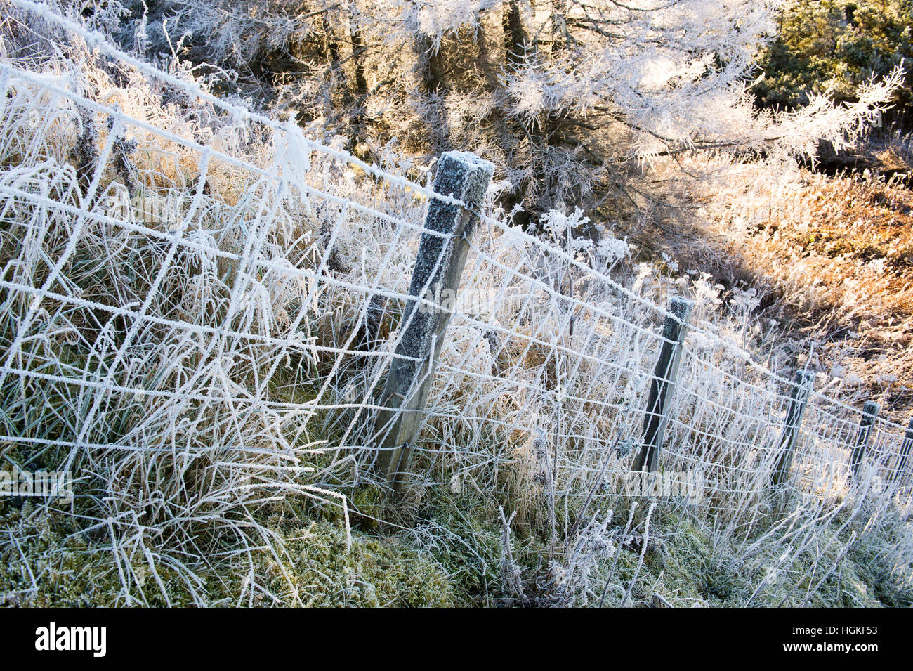 Hoar frost on a wire fence and grass down a slope in the Scottish borders. Scotland - Stock Image
