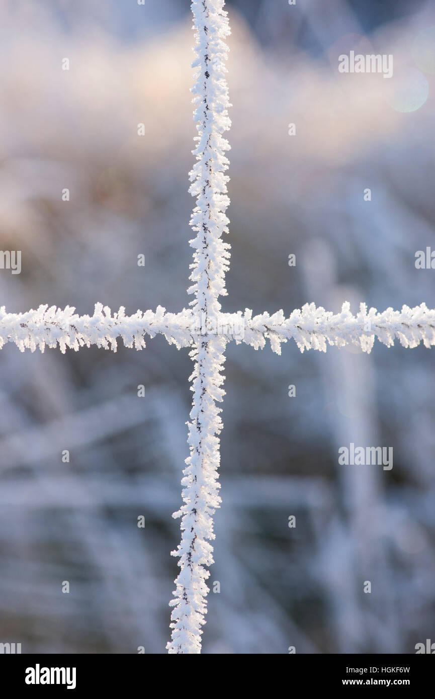 Hoar frost on a wire fence in the Scottish borders. Scotland - Stock Image