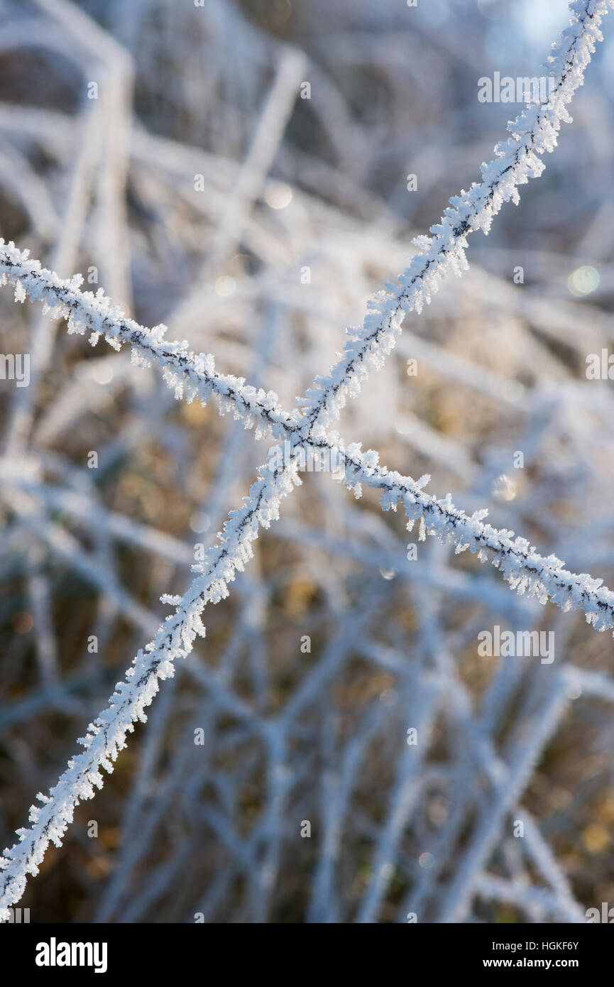 Hoar frost on a wire fence and grass in the Scottish borders. Scotland - Stock Image