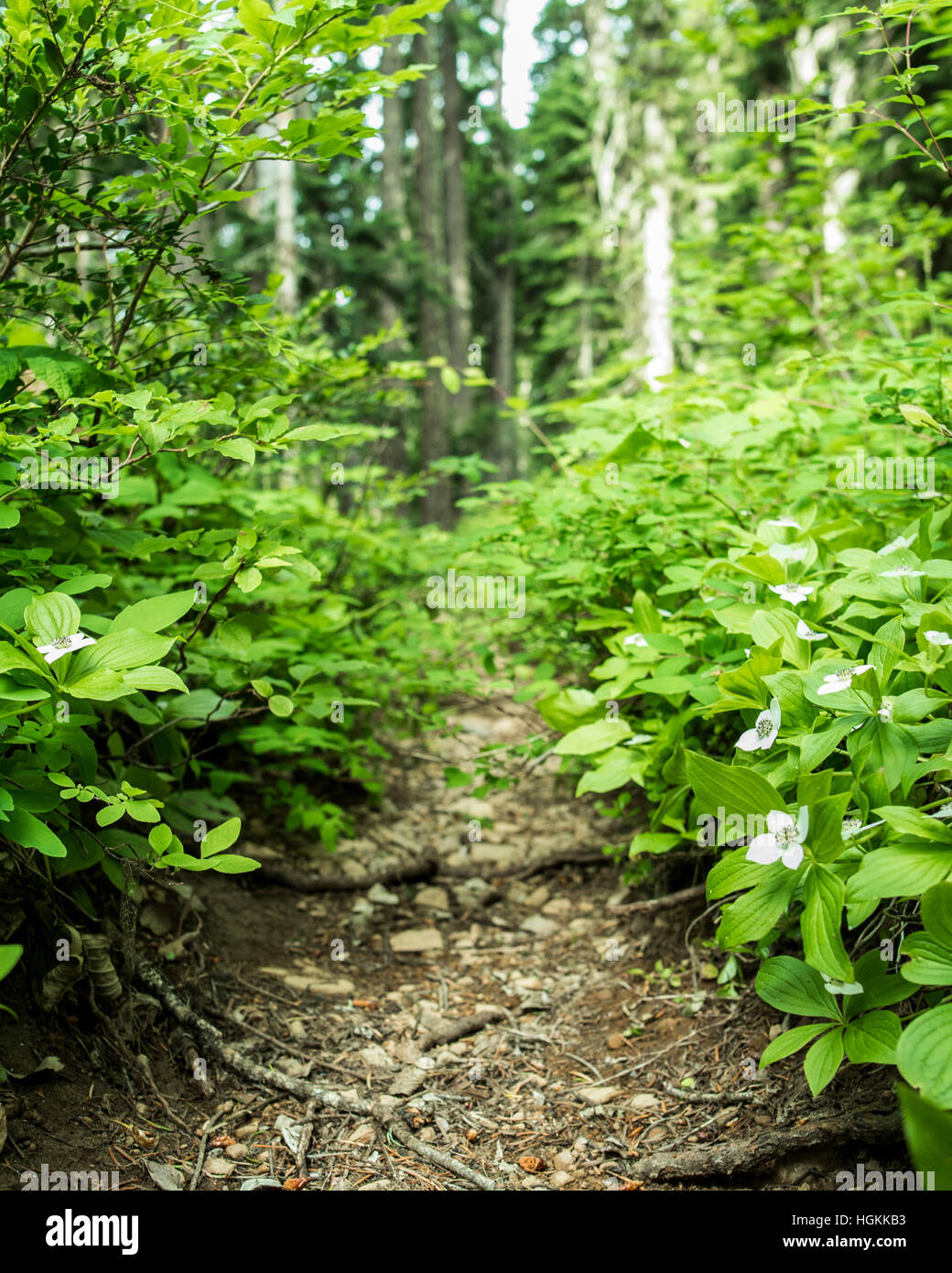 A Small Forest Path Through Green Plants With White Flowers Stock