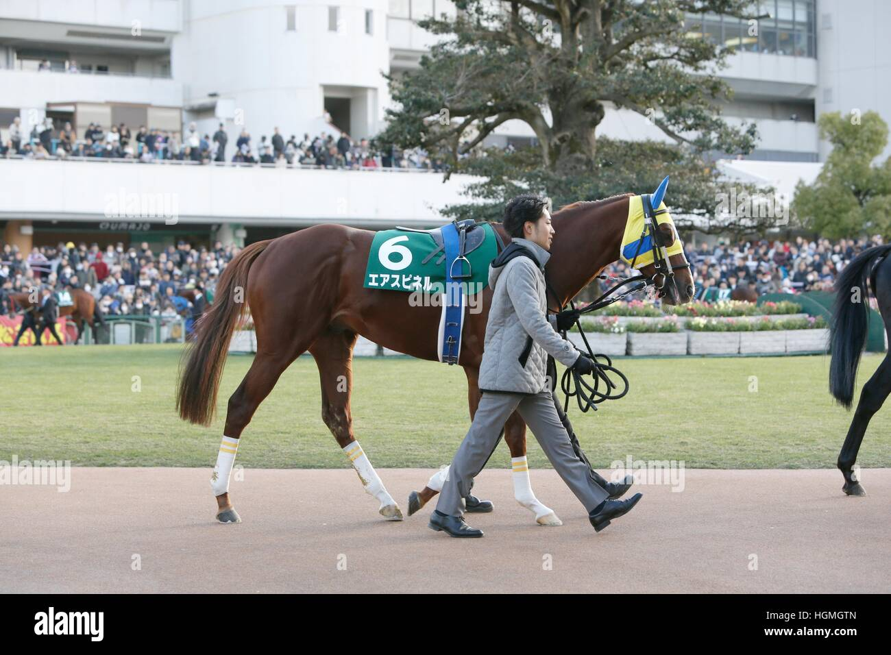 Kyoto, Japan. 5th Jan, 2017. Air Spinel Horse Racing : Air Spinel is led through the paddock before the Sports Nippon - Stock Image