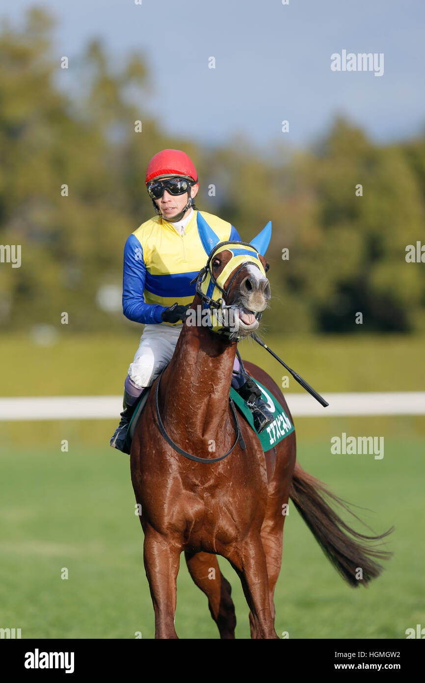 Air Spinel (Yutaka Take), JANUARY 5, 2017 - Horse Racing : Air Spinel ridden by Yutaka Take after winning the Sports - Stock Image