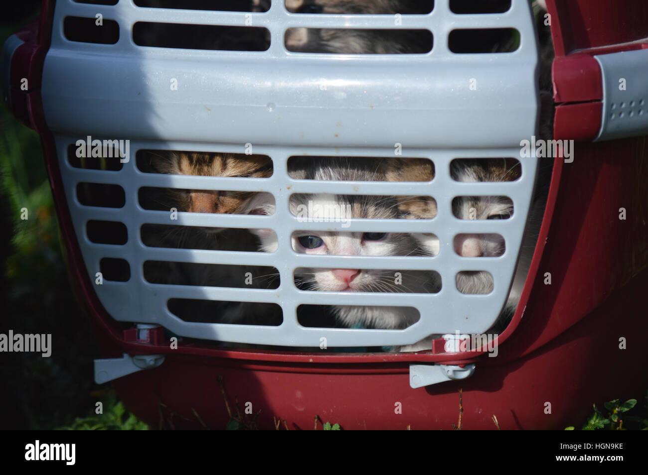 saved orphan little kittens in pet carrier shelter - Stock Image