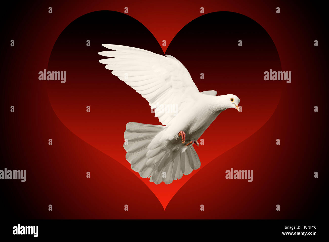 White Dove Flying Symbol Of Love Isolated On Red And Black Heart